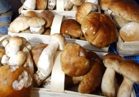 Какие грибы, и в каком виде можно есть кормящей матери