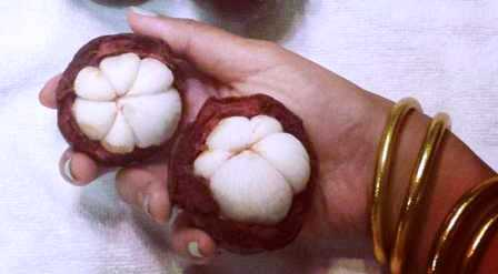 Мангостин (мангустин, мангостан) при беременности