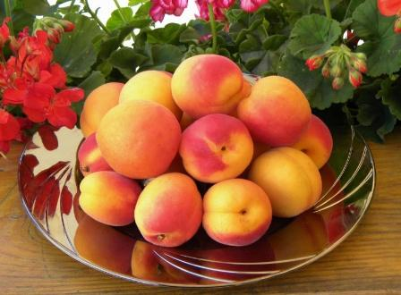 Вред абрикоса при беременности и противопоказания