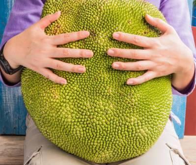Джекфрут при беременности: польза и вред